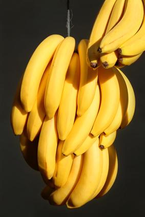 Bunches of Ripe Kenya Cavendish Bananas