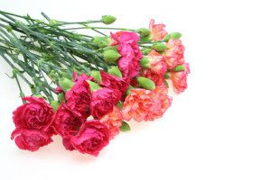 Ethiopia flowers