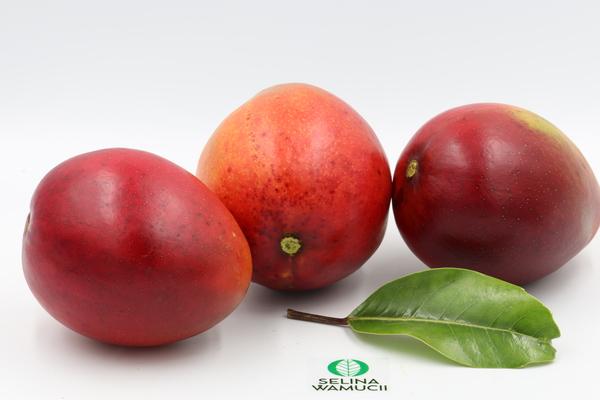 Egypt Mangoes