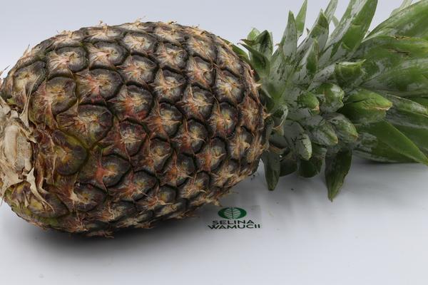 Ghana-Abacaxi