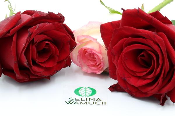 Kenya Roses