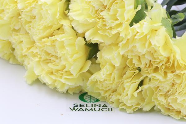 Kenya Carnations