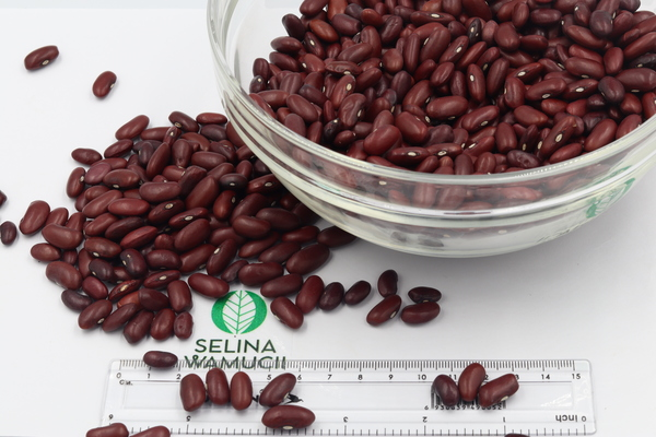 Malawi Kidney Beans Exporters Suppliers Good Market Prices