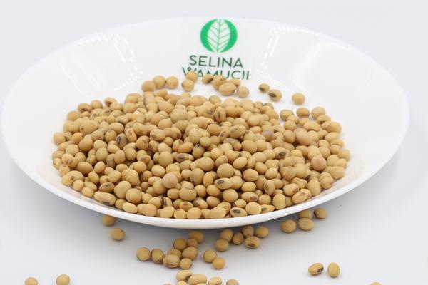 Zambia Soybeans