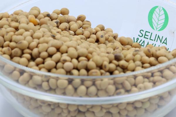 Ghana Soybeans